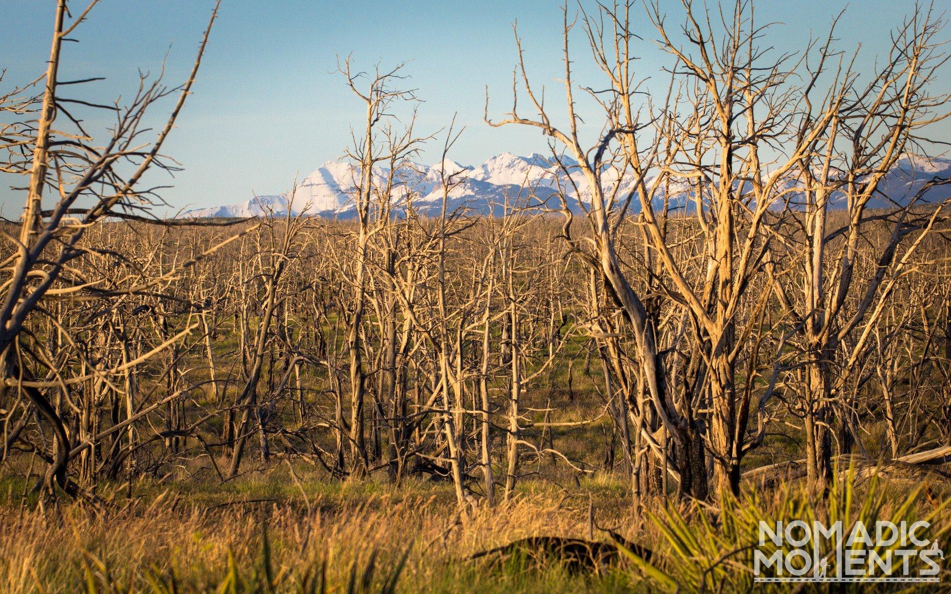 Mesa Mountains
