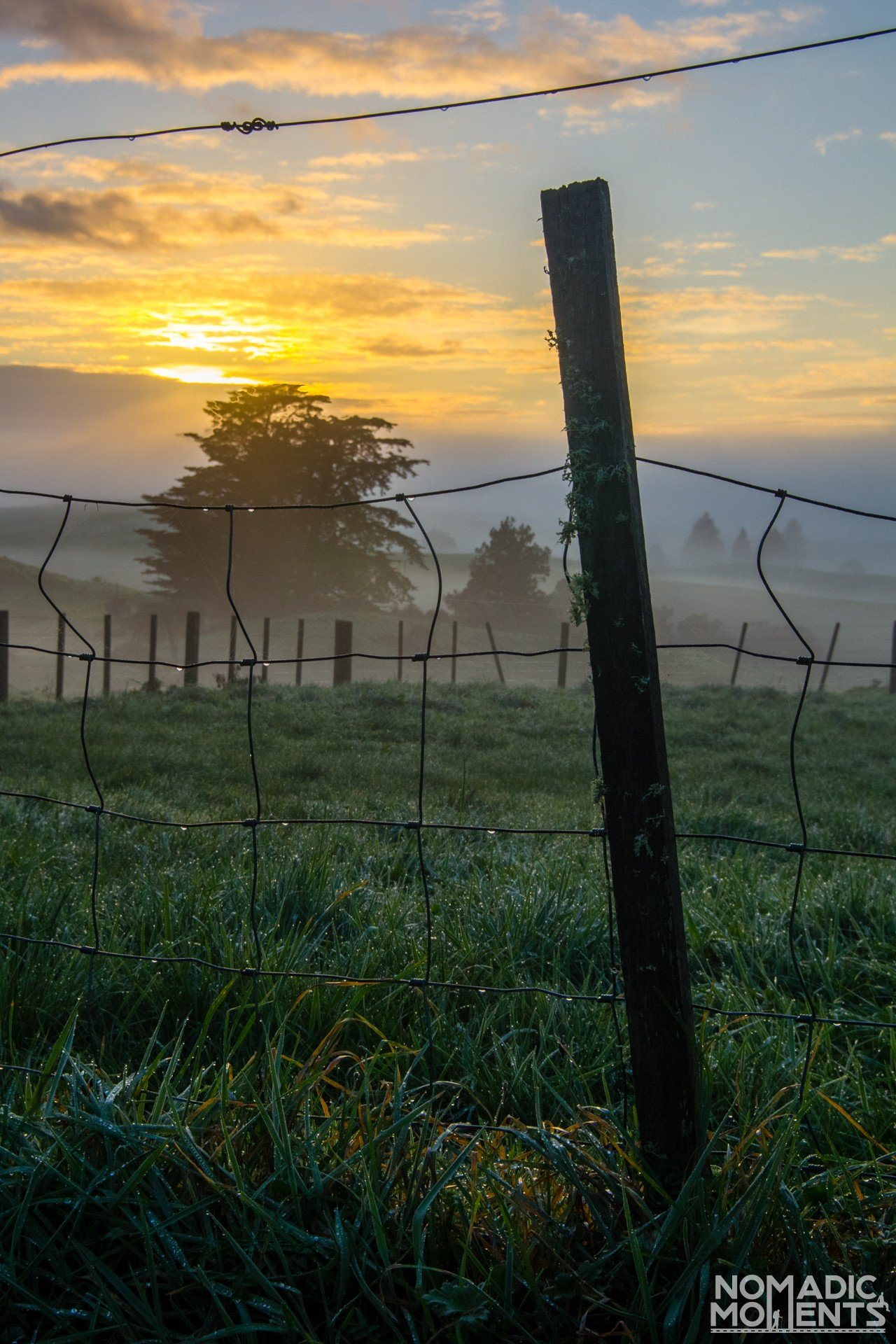 Dew a Sunrise