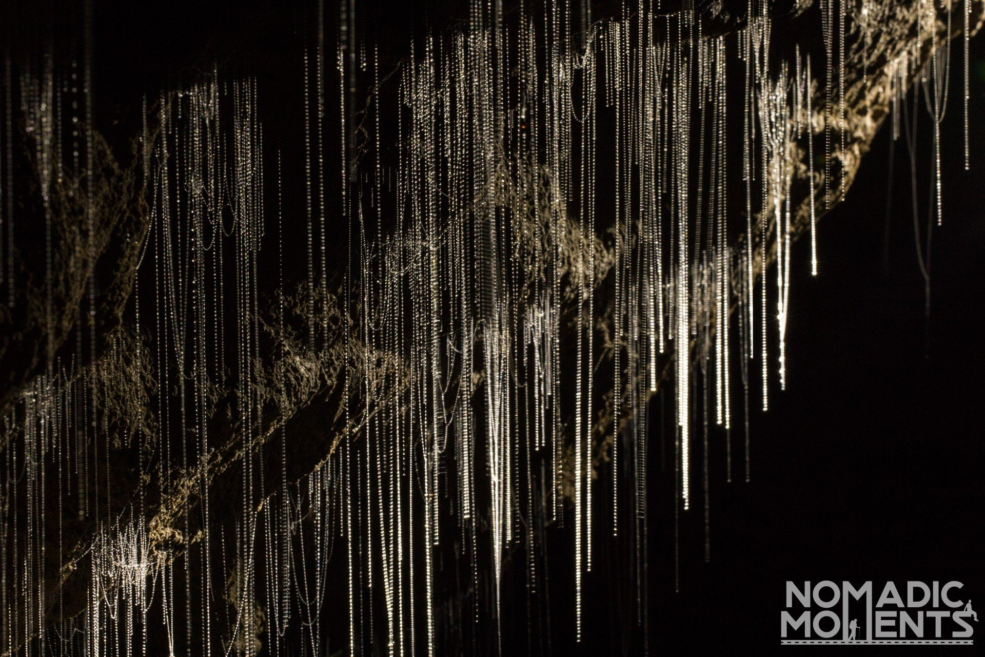 The fishing lines of New Zealand glow worms