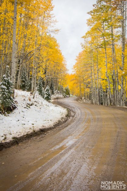 Aspen Forest on Colorado's Best Autumn Road Trip