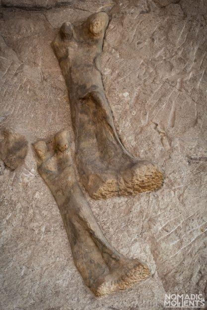 Dinosaur NM - 61