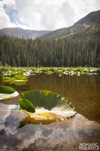 Surprise Lake Lily Pad
