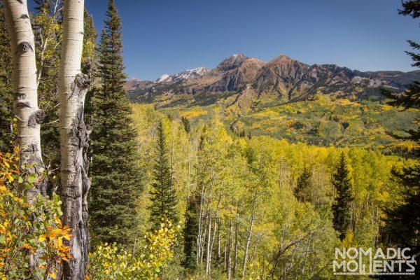 An overlook of Colorado's massive Aspen Forest.