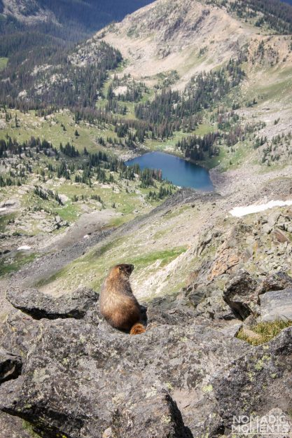 A marmot over looks the alpine valley below Mount Ida.