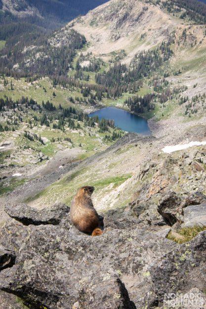 A marmot over looks the alpine valley below Mount Ida.