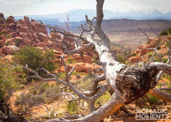 A dead tree trunk overlooks a landscape of rock spires with a mountain range in the distance.