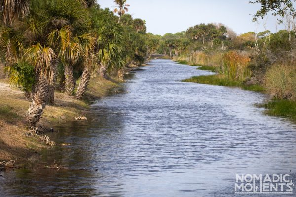 A creek lined with palm trees inside the Savannas Recreation Area
