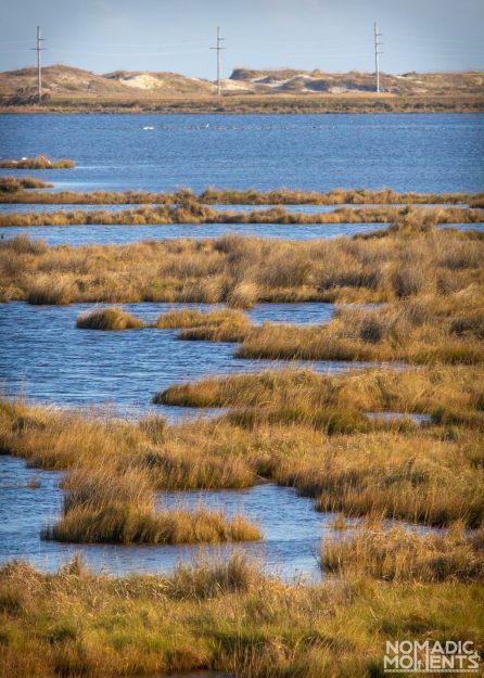 A marsh stretches out into a lake on Pea Island with sand dunes rising in the background.