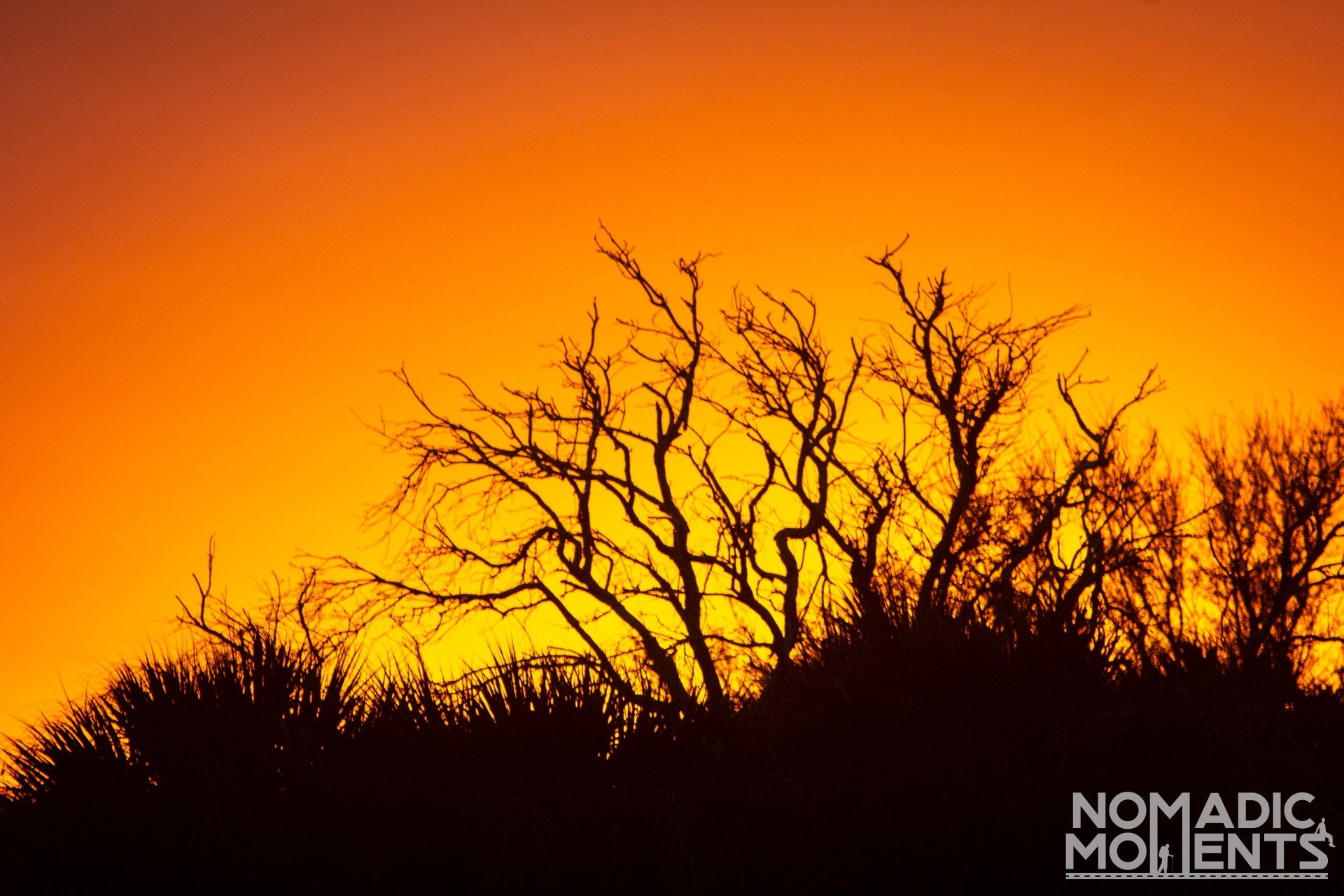 A Pelican Island NWR sunset with trees silhouetted.