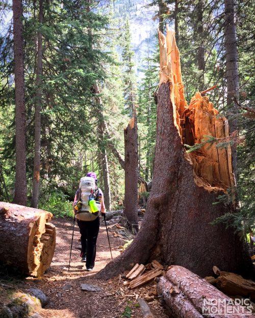 A backpacker in the woods on the Pawnee - Buchanan Loop