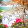 Beaver Falls and the Pink Cactus Flower
