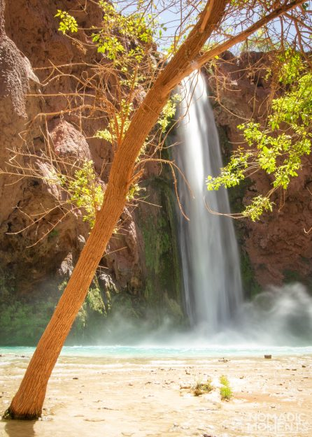 Mooney Falls and a Tree