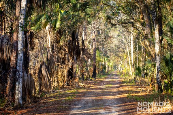 Highlands Hammock Bike Trail