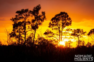Highlands Hammock Sunset