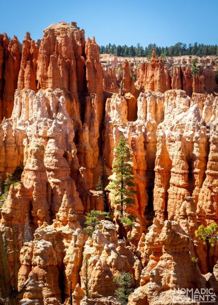 Tree of the Hoodoos