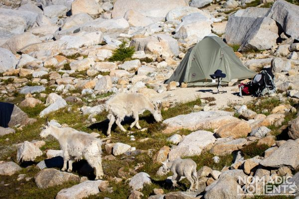 Camping with Goats
