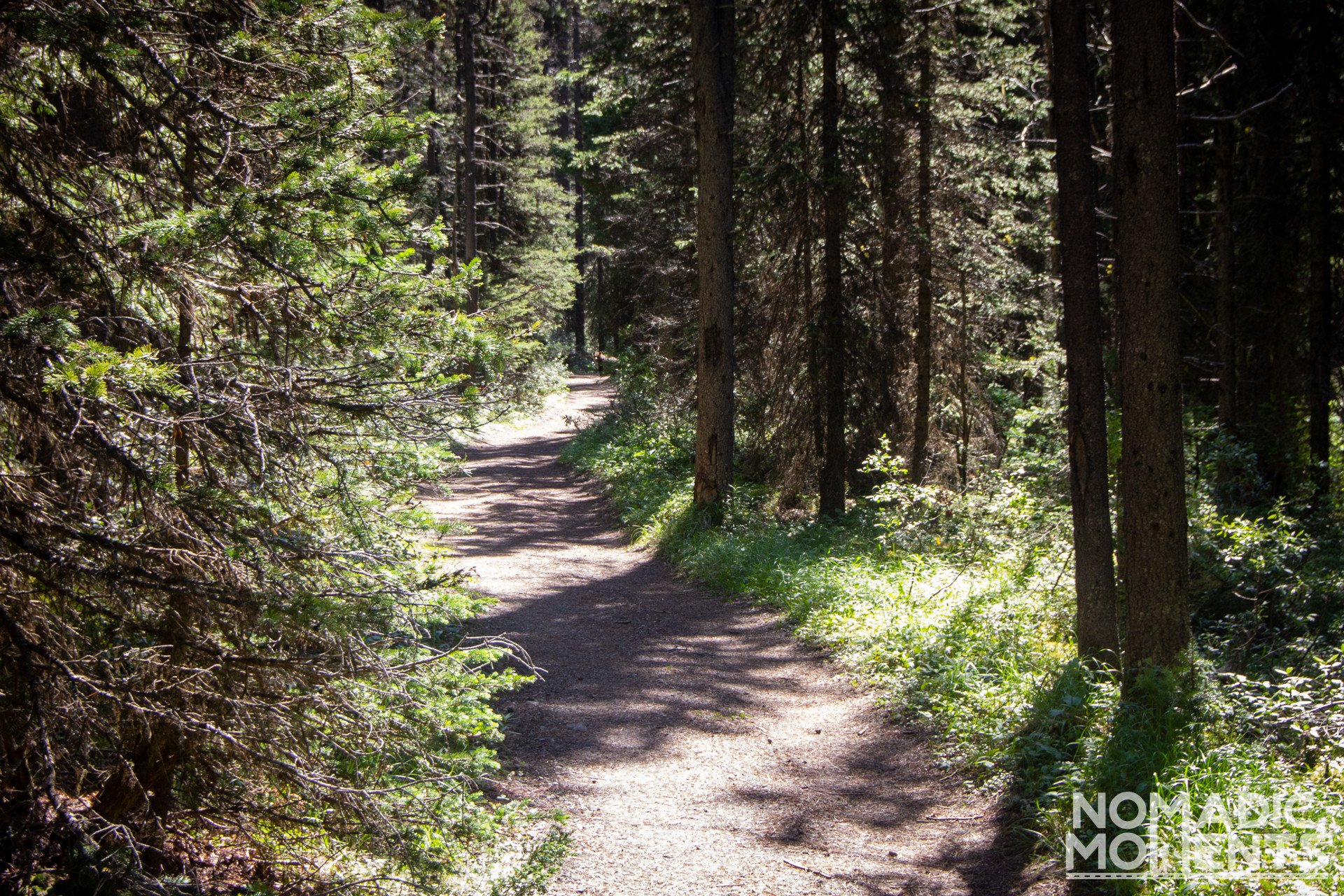 Bear on the Assiniboine Trail