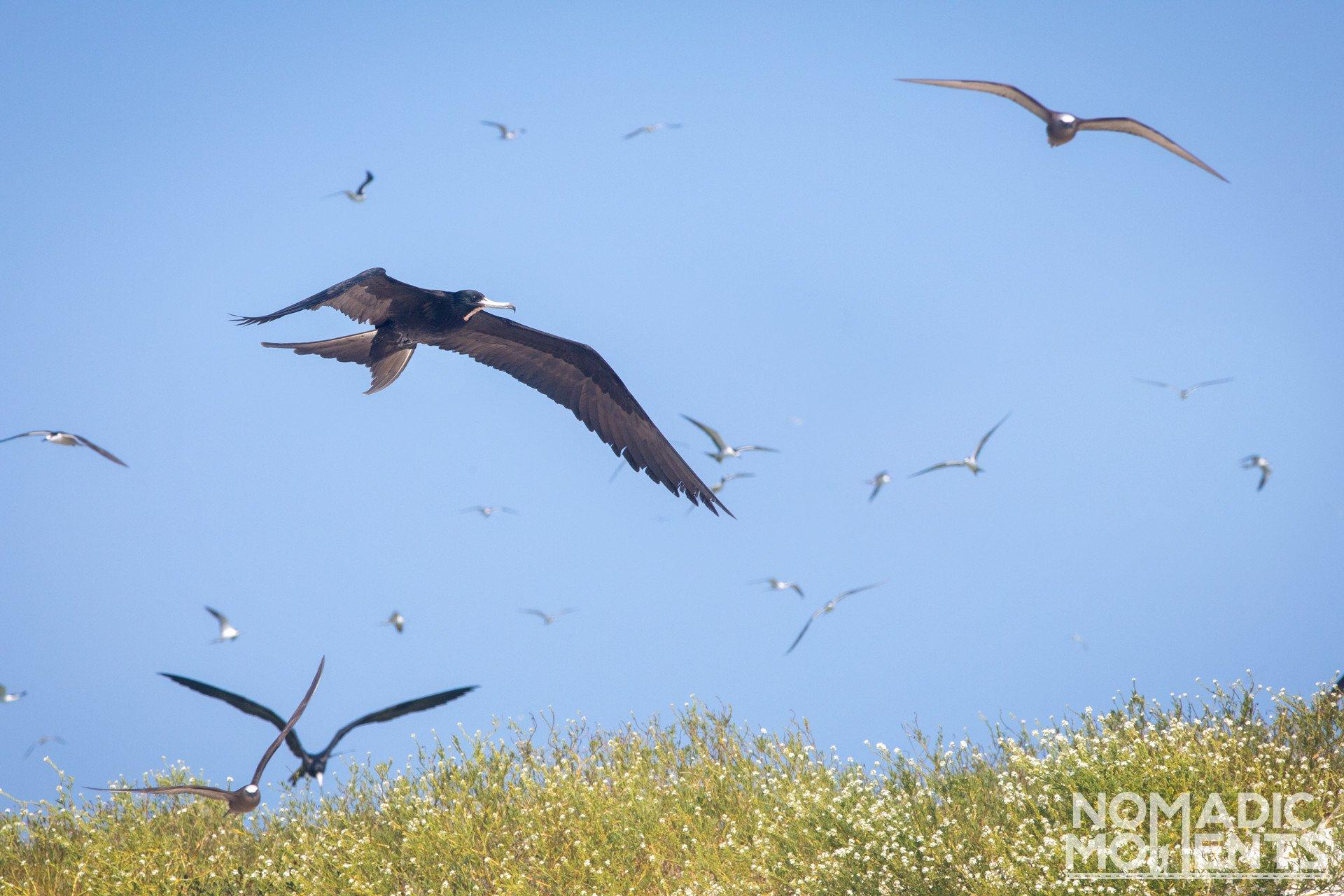Bush Key Birds