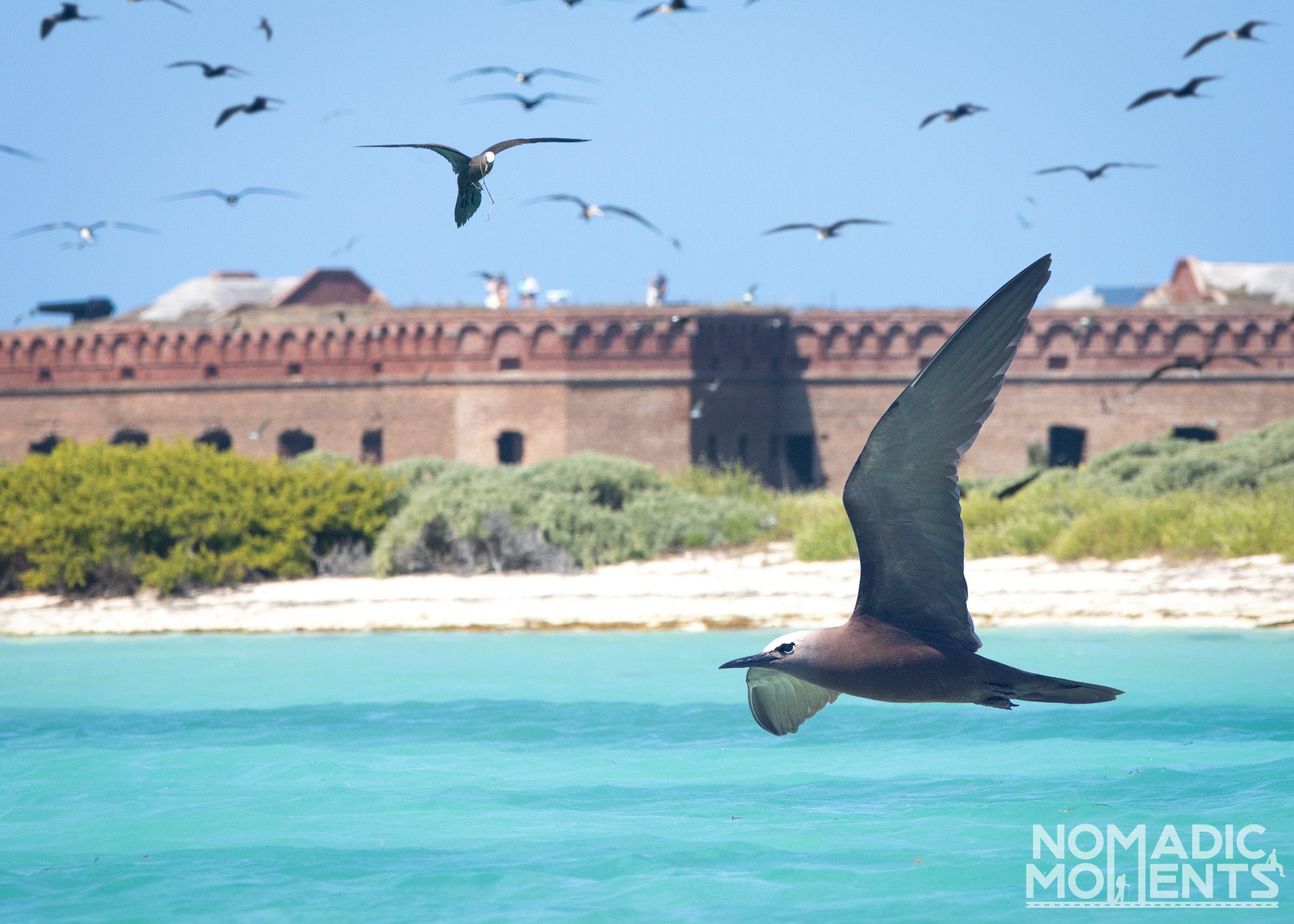 Fort Jefferson Birds