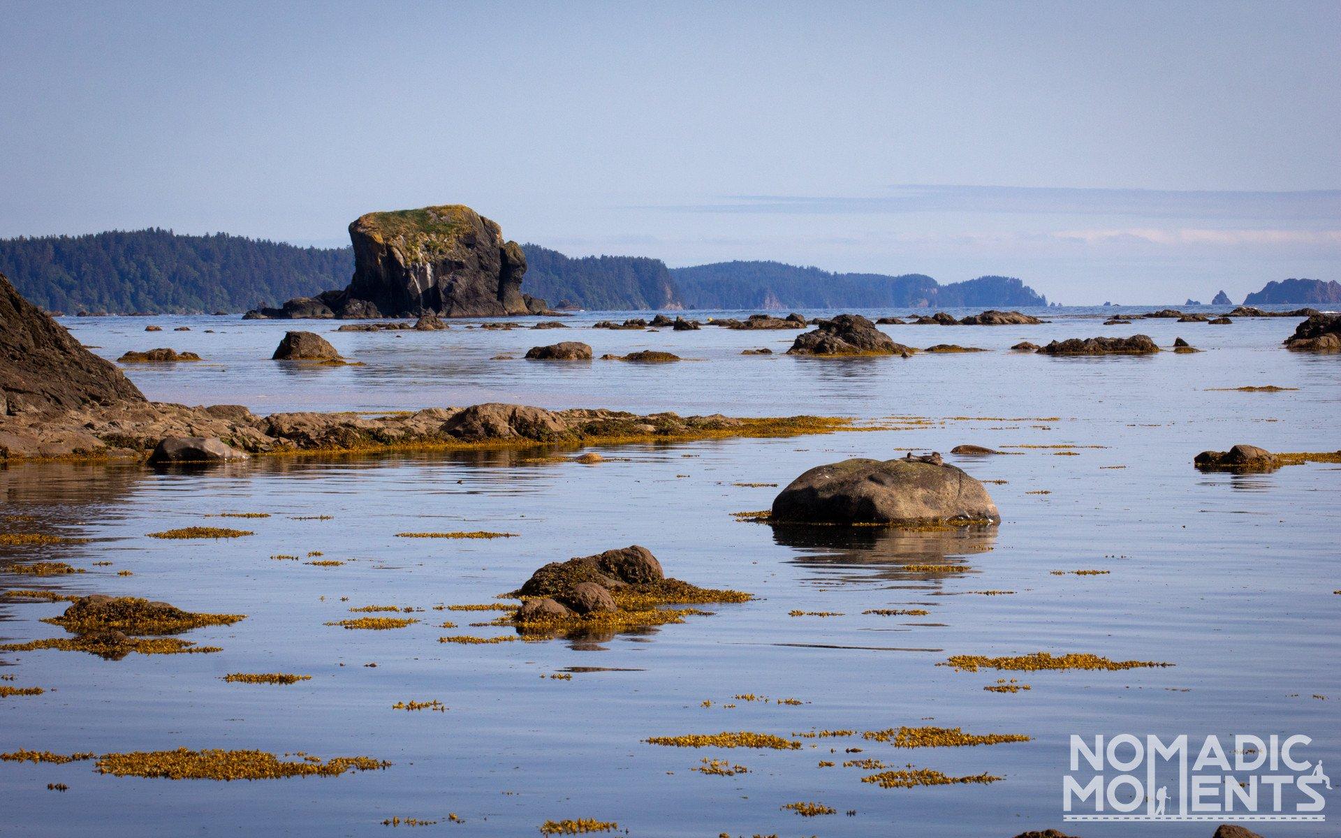 Cape Alava Coastline