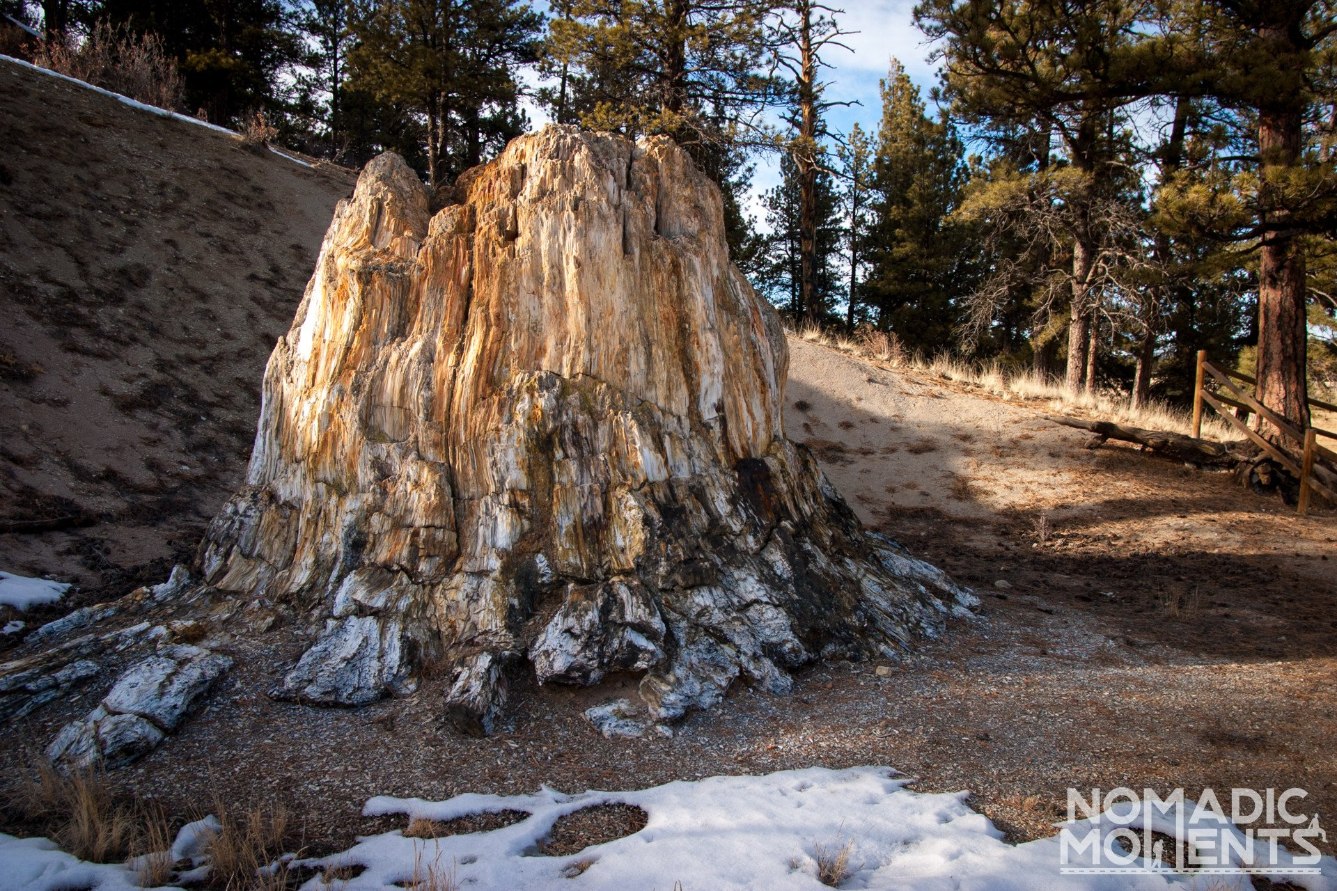 Florissant Fossil Bed Redwood