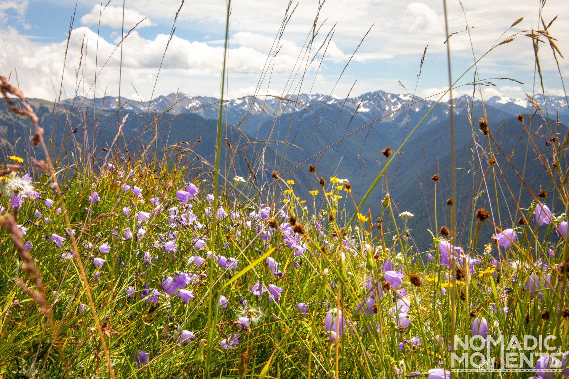 Hurricane Ridge Wildflowers
