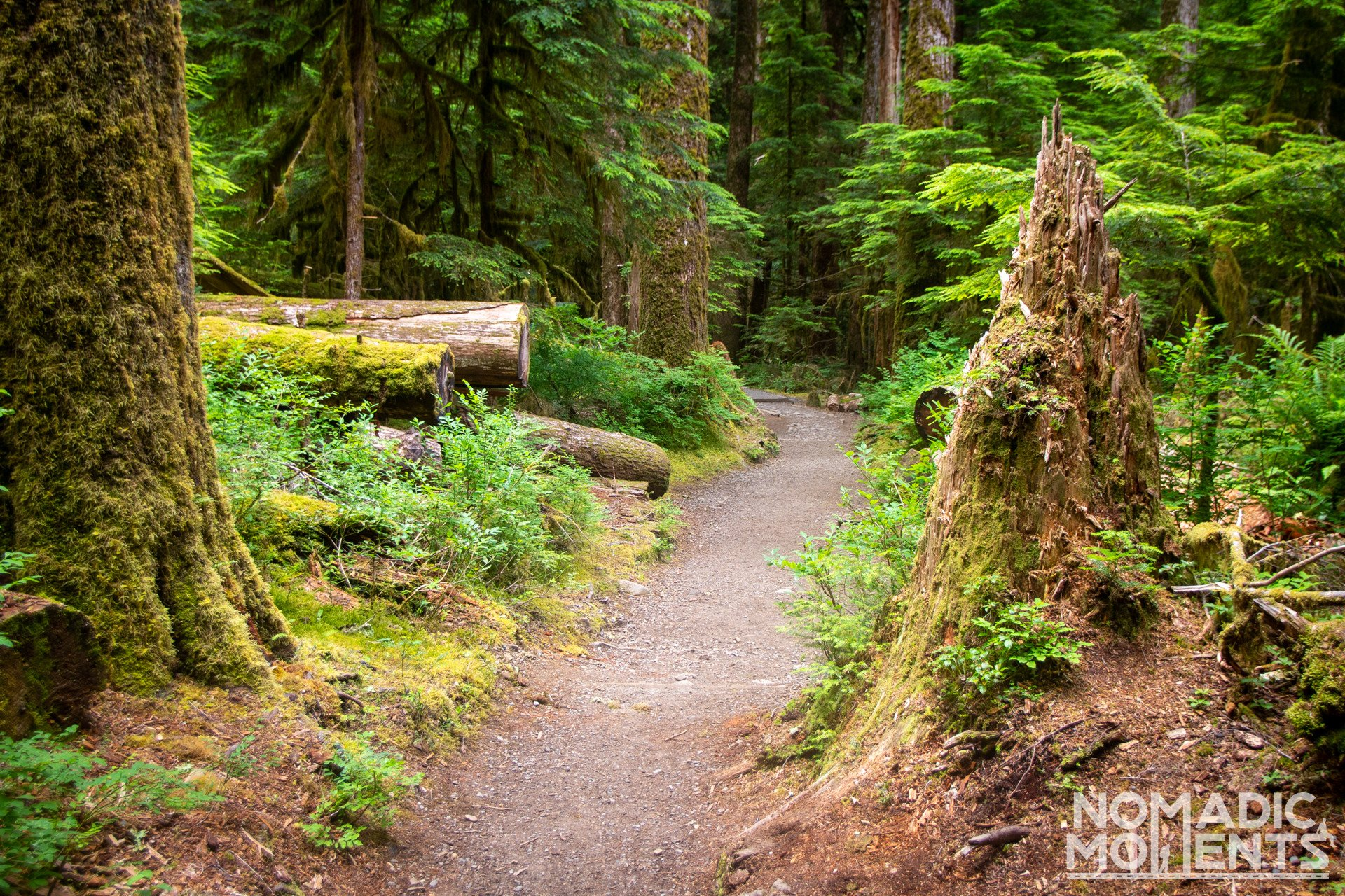 Visiting Olympic National Park Forest Trail
