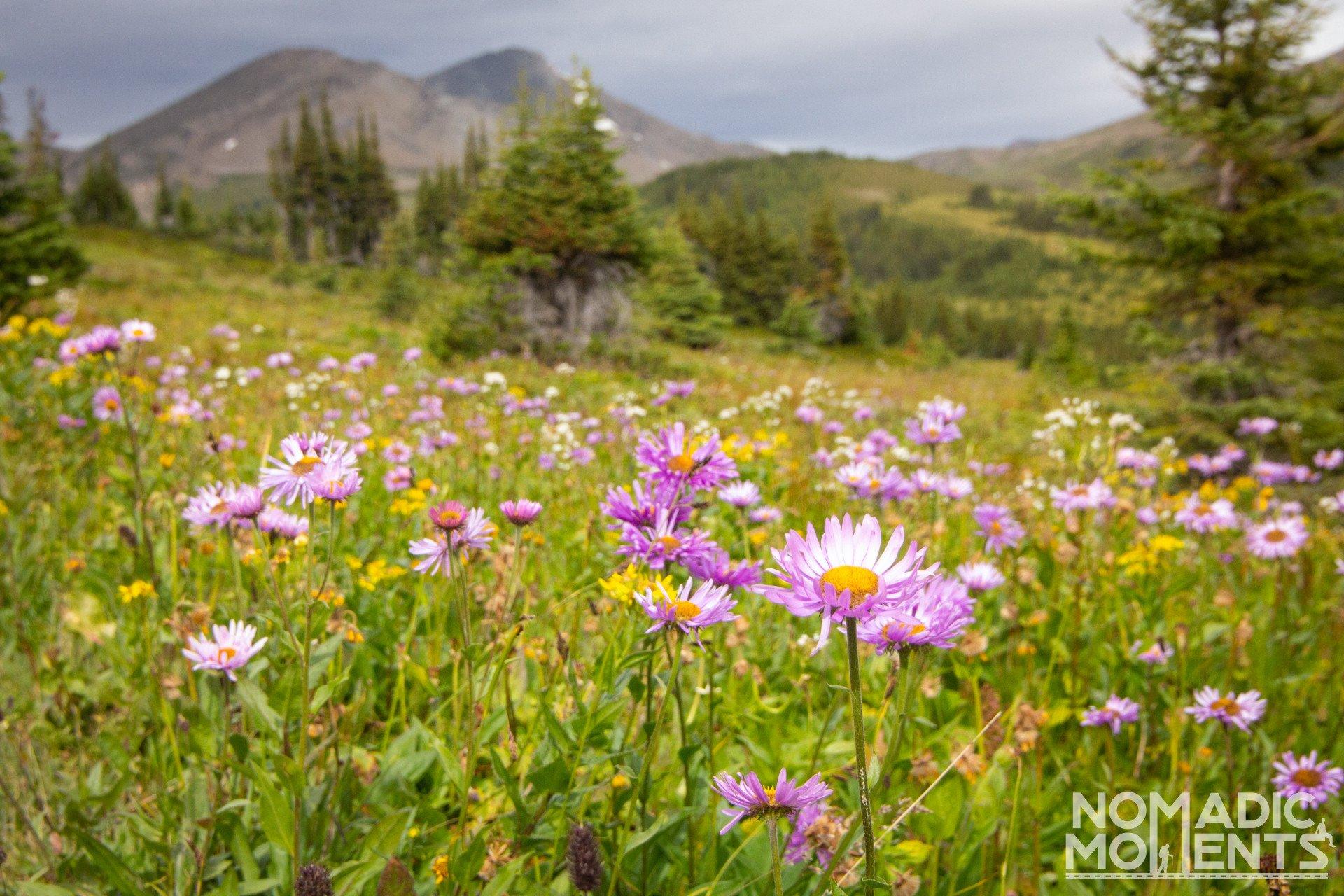 Skyline Trail Wildflowers