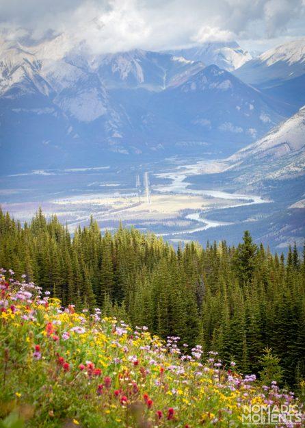 Wildflowers of the Skyline Trail