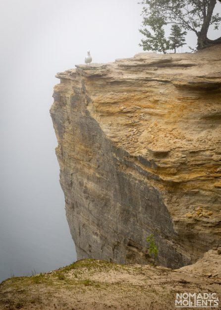 Pictured Rocks Gull