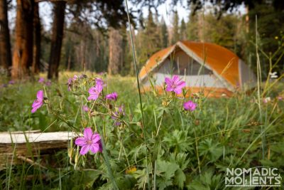 Upper Dailey Creek Campsite